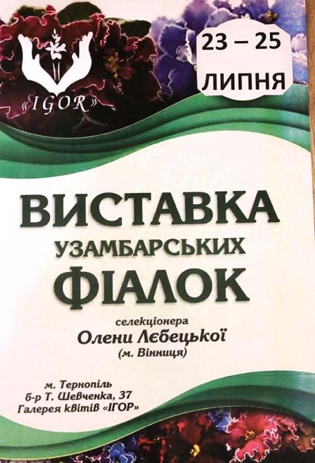 vystavka-fialky-lebecka-2018-1