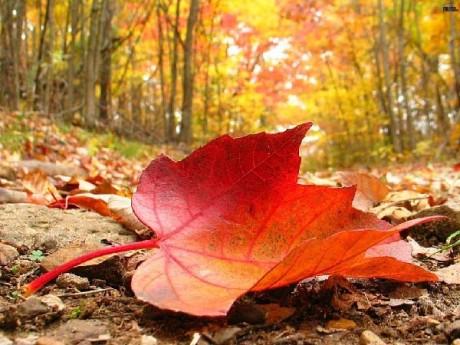 Прийшла осінь – в гості просить