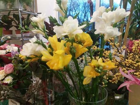 Галерея квітів «Ігор» – всі пори року, представлені в квітах (фото)