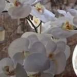 Orhideya-1-e1553373875444-806x484